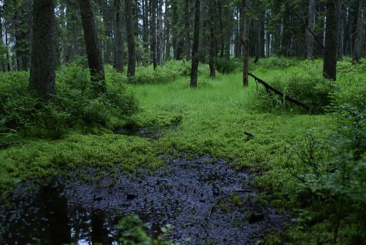 Výzva za ochranu a rozšiřování české divočiny